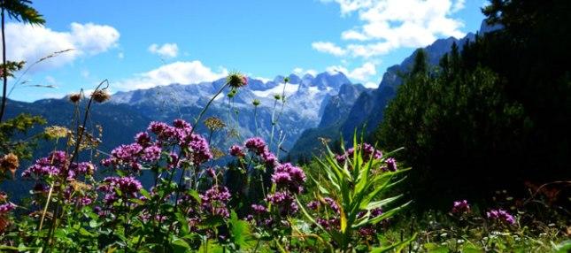 Wandern in der Skiregion Dachstein-West
